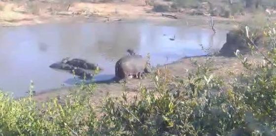 グレータークルーガー公園のイドゥベ周辺ライブカメラ/南アフリカ