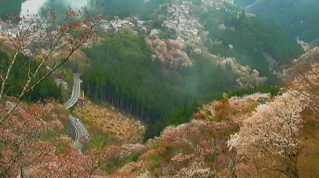 吉野桜と町並みライブカメラと気象レーダー/奈良県吉野町