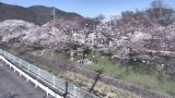 新田公園の桜並木ライブカメラと気象レーダー/長野県上田市