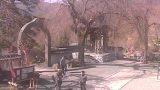 真田山長谷寺のシダレザクラライブカメラと雨雲レーダー/長野県上田市