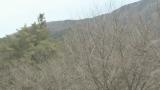 木曽文化公園の桜ライブカメラと気象レーダー/長野県木曽町