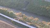 境川・串川ライブカメラ(4ヶ所)と気象レーダー/神奈川県相模原