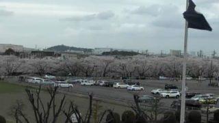 五条川さくら並木ライブカメラと気象レーダー/愛知県大口町