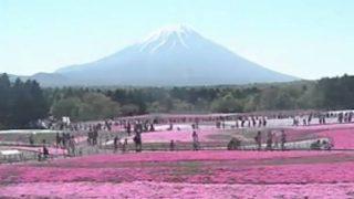 2017富士芝桜祭りライブカメラと雨雲レーダー/山梨県富士河口湖町