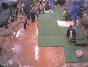 マリンピア松島水族館ライブカメラと雨雲レーダー/宮城県松島町