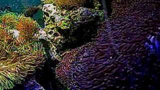 サンシャイン水族館のクマノミ水槽ライブカメラ(USTREAM)と雨雲レーダー/東京都豊島区