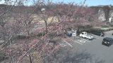 東御中央公園の桜並木ライブカメラと気象レーダー/長野県東御市
