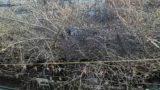 中目黒・目黒川の桜並木ライブカメラ③と雨雲レーダー/東京都目黒区