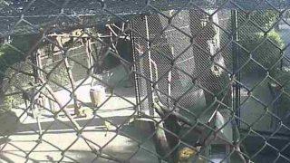 フェニックス自然動物園のリスザルライブカメラと雨雲レーダー/宮崎県宮崎市