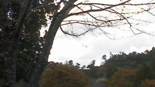徳島県立神山森林公園イルローザの森ライブカメラと気象レーダー/徳島県神山町