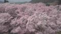 高遠城址公園の桜ライブカメラと雨雲レーダー/長野県伊那市