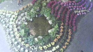 フローランテ宮崎のアトリウム・ガーデンライブカメラと雨雲レーダー/宮崎県宮崎市