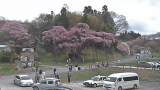 紅枝垂地蔵桜ライブカメラと気象レーダー/福島県郡山市
