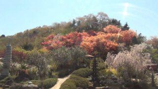 停止中:花見山公園ライブカメラと雨雲レーダー/福島県福島市