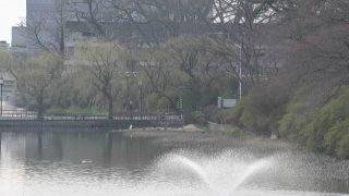 停止中:千秋公園ライブカメラと雨雲レーダー/秋田県秋田市