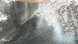 石神井川 ライブカメラ(板橋)と雨雲レーダー/東京都本町