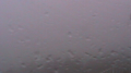 停止中:二見興玉神社の夫婦岩ライブカメラと気象レーダー/三重県伊勢市