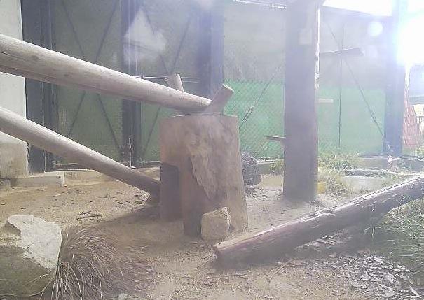 福岡市動物園のツシマヤマネコライブカメラと雨雲レーダー/福岡県福岡市