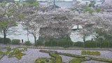 安倍文殊院ライブカメラと気象レーダー/奈良県桜井市