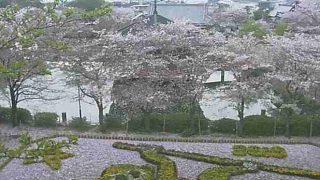 安倍文殊院ライブカメラと雨雲レーダー/奈良県桜井市