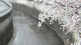 石神井川 ライブカメラ(栗原橋)と気象レーダー/東京都板橋区