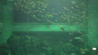 停止中:上越市立水族博物館の水槽ライブカメラと雨雲レーダー/新潟県上越市