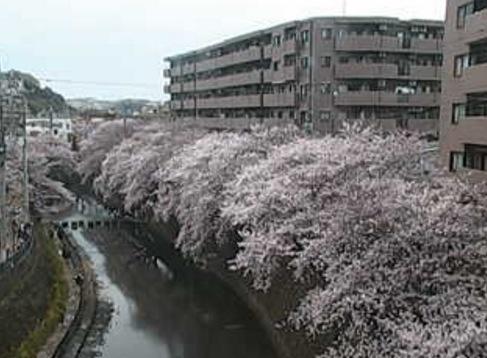 大岡川桜並木ライブカメラと気象レーダー/神奈川県横浜市