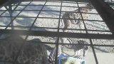 フェニックス自然動物園のアフリカ園餌場ライブカメラと雨雲レーダー/宮崎県宮崎市
