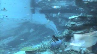 停止中:名古屋港水族館(コミュファ光水族館)ライブカメラ(8ヶ所)と雨雲レーダー/愛知県名古屋市