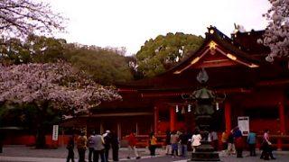 停止中:富士山本宮浅間大社の桜ライブカメラと気象レーダー/静岡県富士宮市