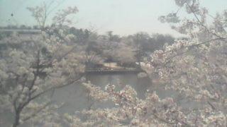 高田公園 極楽橋・中央ライブカメラと雨雲レーダー/新潟県上越市