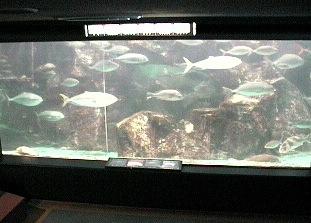 のとじま水族館ライブカメラと雨雲レーダー/石川県七尾市
