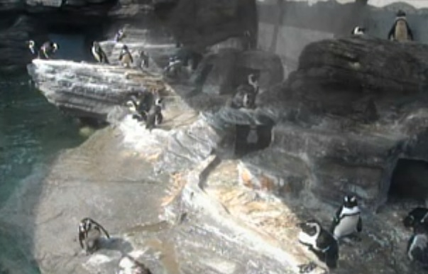 サンシャイン水族館 草原のペンギン ライブカメラと雨雲レーダー/東京都豊島区