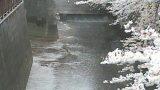 目黒川の宝来橋上流 合流点ライブカメラと雨雲レーダー/東京都目黒区