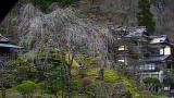 会津東山温泉向瀧の桜ライブカメラと気象レーダー/福島県会津若松市