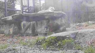 """平川動物公園の""""ホワイトタイガー""""ライブカメラと雨雲レーダー/鹿児島県鹿児島市"""