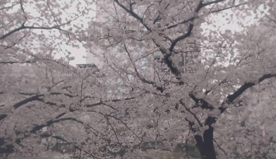 停止中:中目黒・目黒川の桜並木ライブカメラ②と雨雲レーダー/東京都目黒区