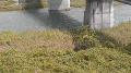 錦川・本郷川・今津川・門前川・由宇川・島田川 ライブカメラと雨雲レーダー/山口県岩国市