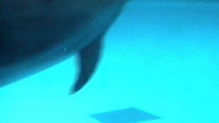 停止中:アクアワールド大洗水族館・イルカライブカメラと気象レーダー/茨城県大洗町