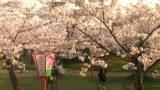 鶴ヶ岡城址鶴岡公園、護国神社前の桜ライブカメラと気象レーダー/山形県鶴岡市