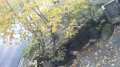 停止中:乳頭温泉郷ライブカメラと気象レーダー/秋田県仙北市