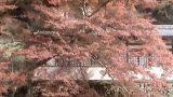 瀧安寺鳳凰閣ライブカメラと雨雲レーダー/大阪府箕面市