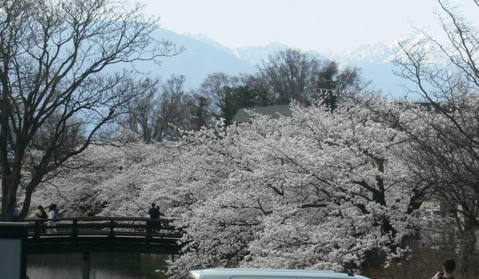 国宝松本城の桜ライブカメラと気象レーダー/長野県松本市