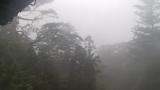 屋久島の森ライブカメラと雨雲レーダー/鹿児島県屋久島町