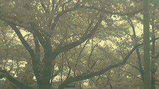 五条川の桜開花ライブカメラと気象レーダー/愛知県大口町
