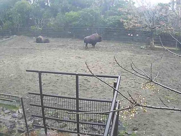 フェニックス自然動物園のバイソンライブカメラと雨雲レーダー/宮崎県宮崎市