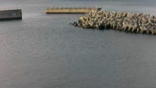 停止中:横須賀大津港ライブカメラと雨雲レーダー/神奈川県横須賀市