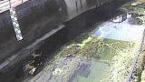 石神井川 ライブカメラと気象レーダー/東京都北区