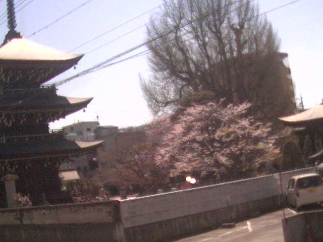 飛騨国分寺ライブカメラと雨雲レーダー/岐阜県高山市