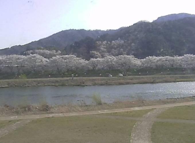 旭川・桜並木ライブカメラ(割烹旅館 おかもと)と雨雲レーダー/岡山県真庭市